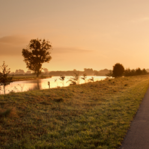 A road, sunrise, grass and trees which reflect onto a small lake.