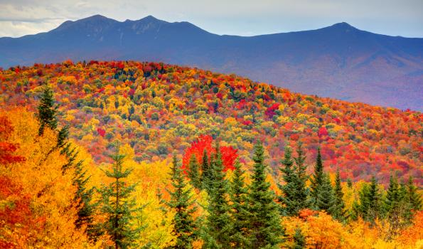 A picture of a landscape of trees with fall-colored leaves and mountains