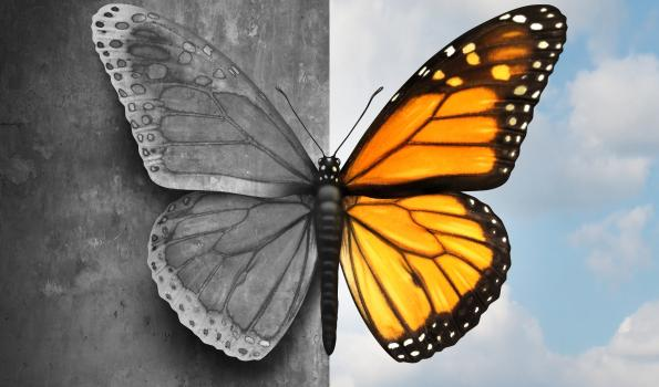 butterfly in 2 colors